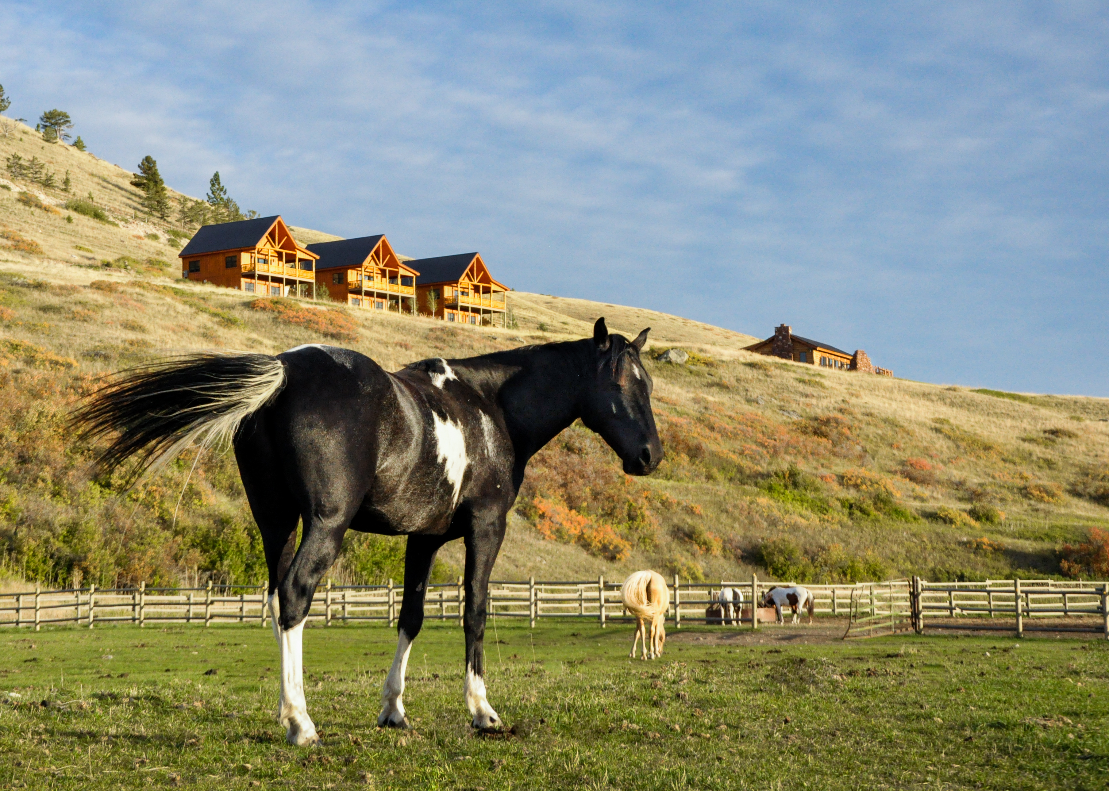 Horses and Cabins